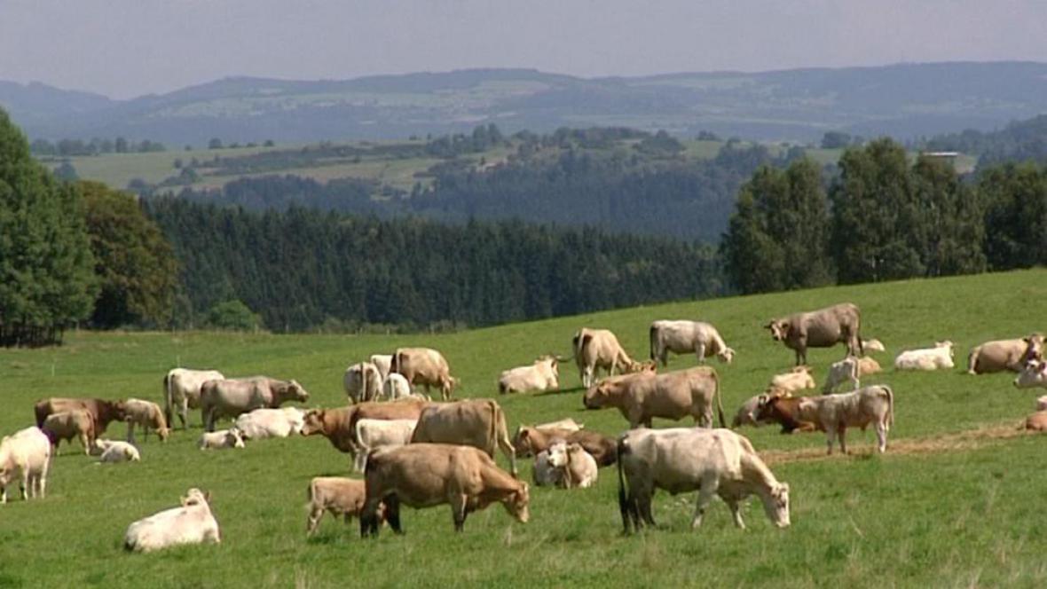 Pastviny nad ložisky cínu a wolframu u Horního Slavkova