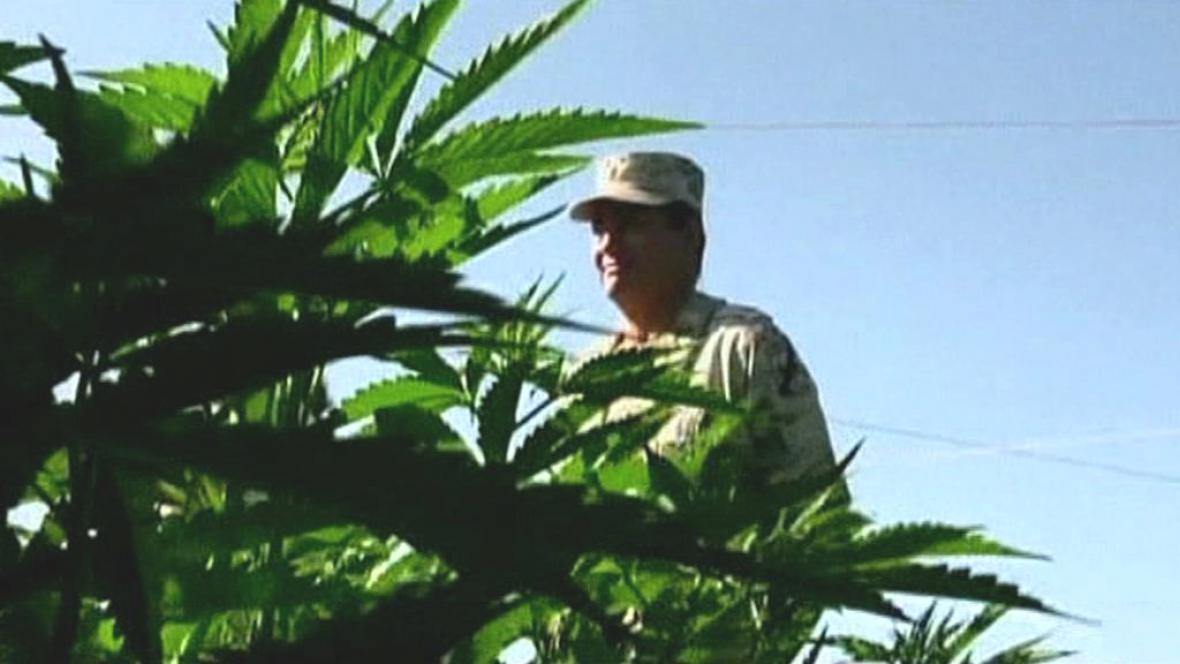 Mexická armáda objevila největší plantáž s marihuanou v zemi