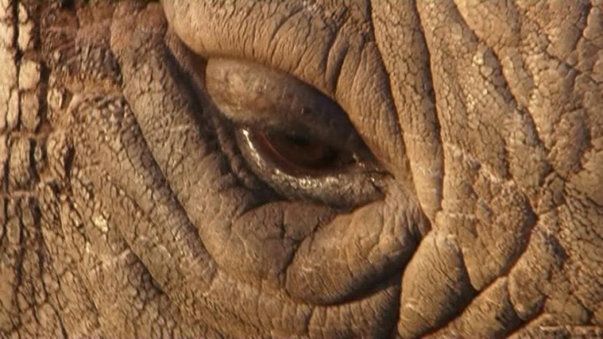 Oko nosorožce