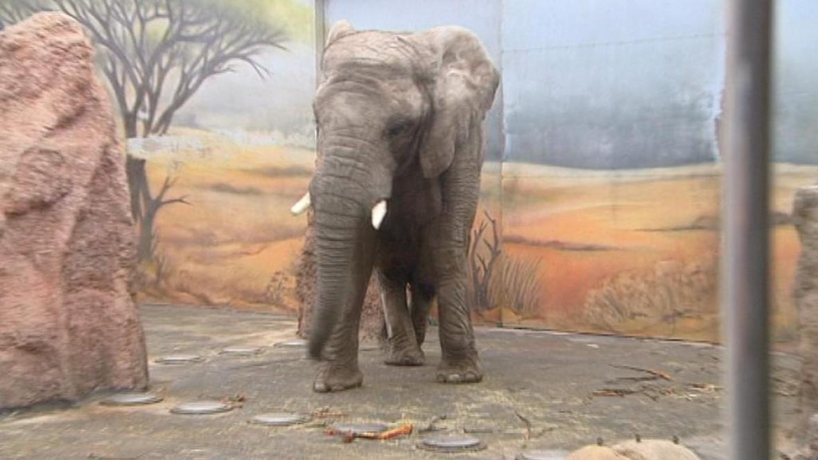 Slonice Umbu