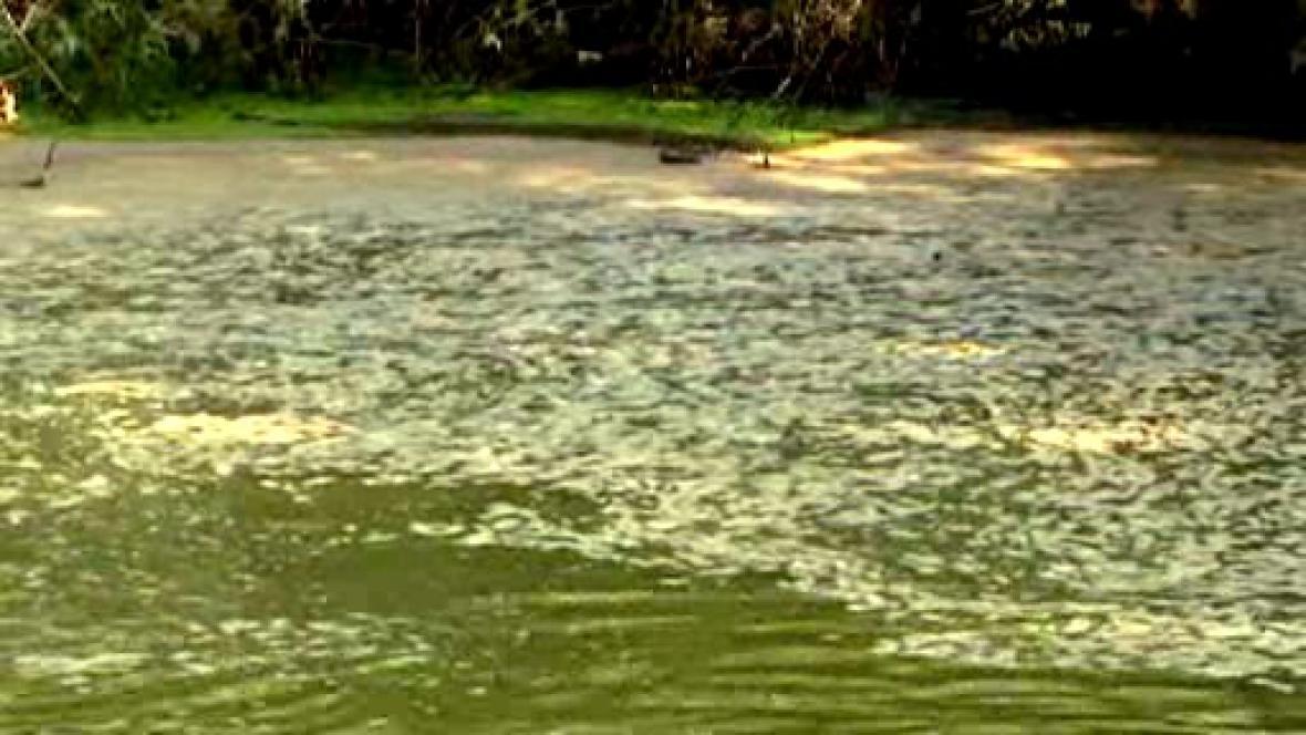 Znečištěný vodní tok