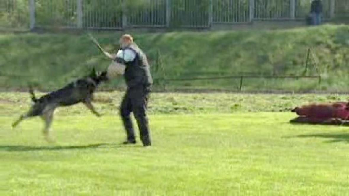 Mistrovství služebních psů