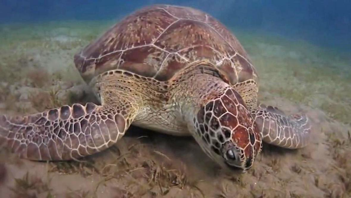 Stříkat želvu