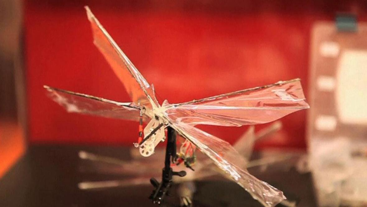 Tvarem i strukturou vychází křídla dronů z křídel ptačích