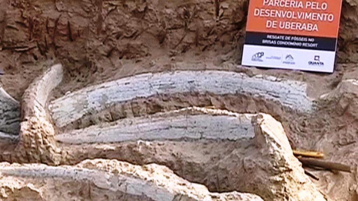 Kosti dinosaura nalezené v Brazílii