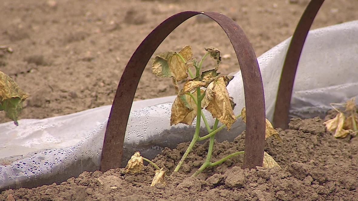 Vláda chce proti suchu bojovat pomocí přehrad a dotací