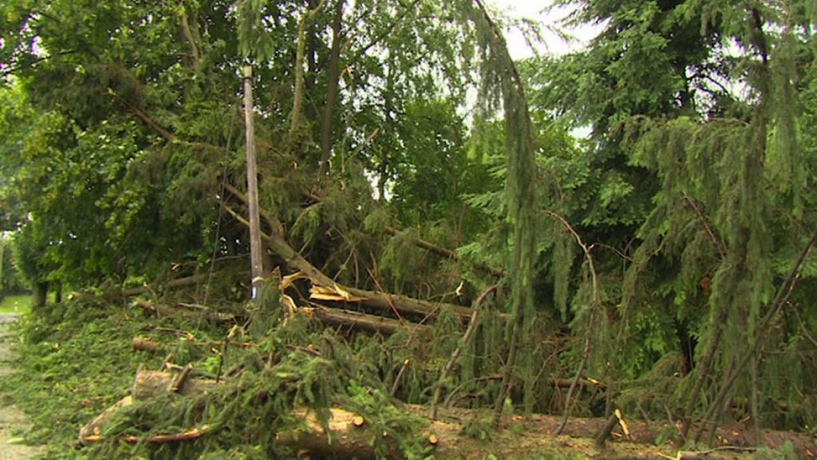 Polámané stromy a větve poškodily dráty elektrického vedení