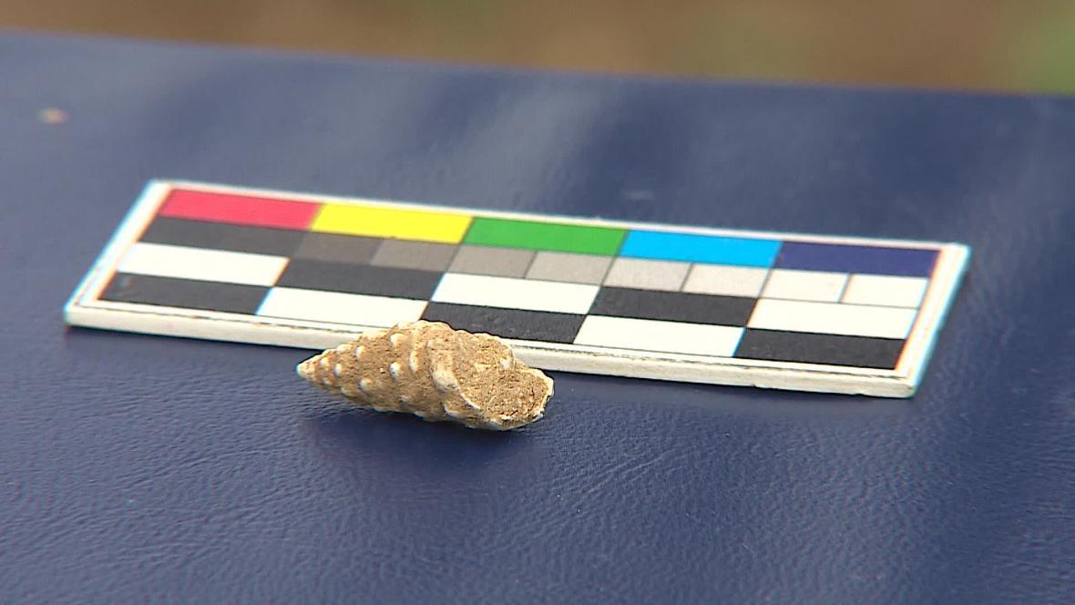 Pravěký šperk byl zřejmě náhrdelníkem z ulit