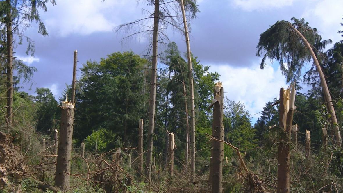 Poškozené lesy na východě Čech