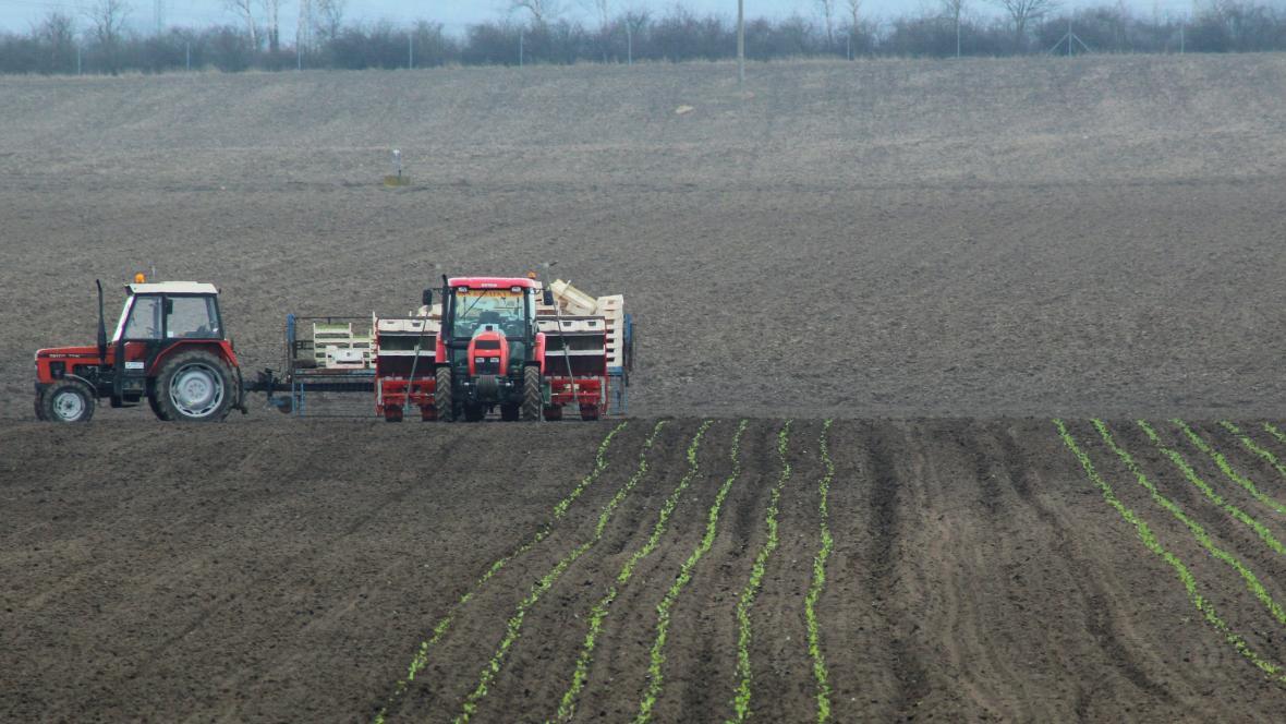 Zemědělci sází první rané druhy salátů u Přerova nad Labem