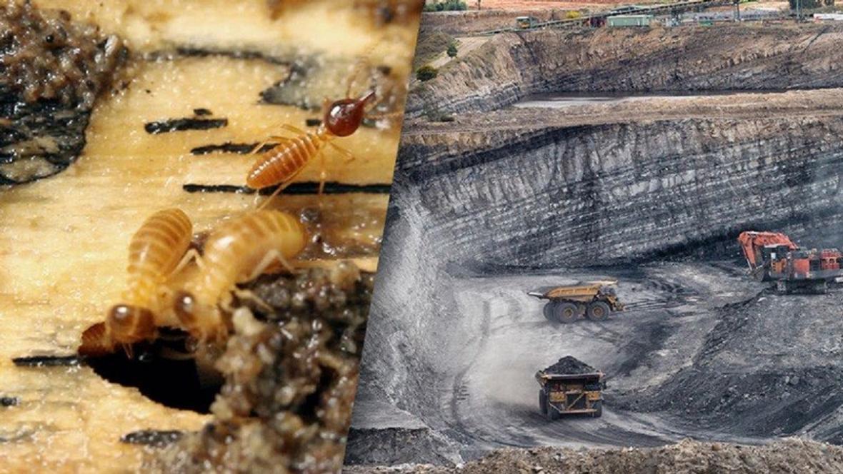 Termiti a čisté uhlí