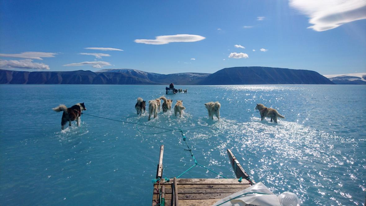 Psí spřežení brodící se vodou v Grónsku