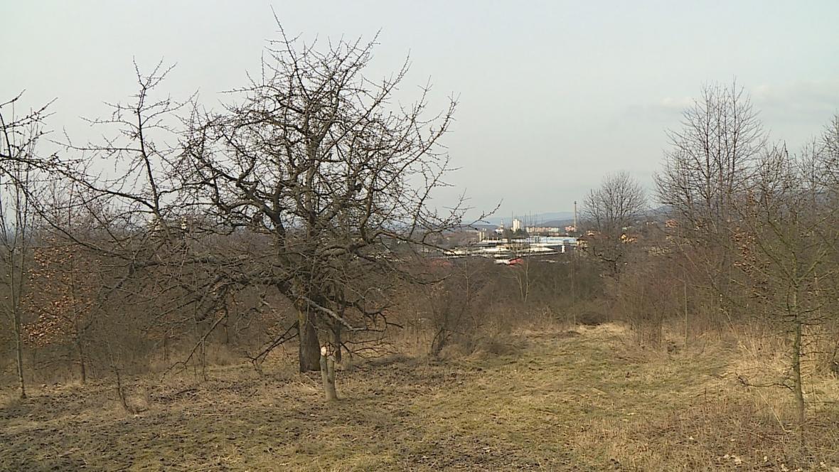 Třešňový sad ve Šternberku