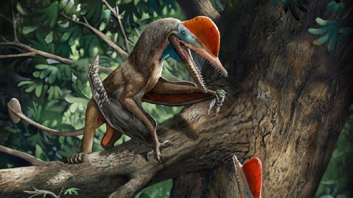 Kunpengopterus antipollicatus - rekonstrukce