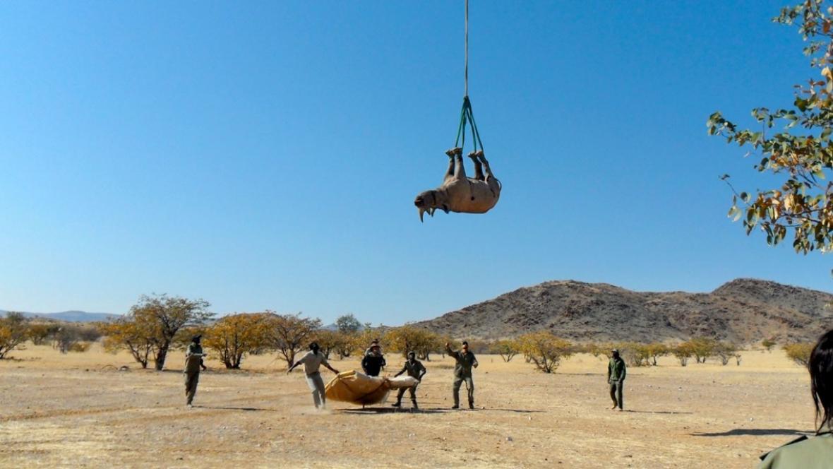 Transport nosorožců