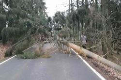 Na Vysočině hasiči odstraňovali spadlé stromy a větve