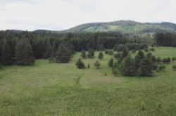 Rašeliniště