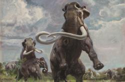 Mammuthus (Parelephas) columbi (výřez), 1961