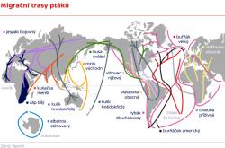 Migrační trasy ptáků