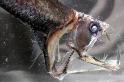 Hlubokomořská ryba