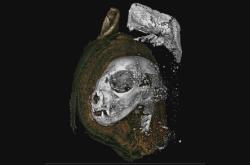 Sken lebky mumifikovaného kotěte
