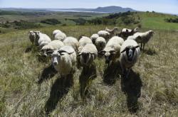 Pastva pomáhá ohroženým druhům rostlin