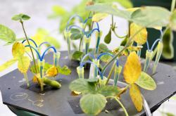 Testování obsahu kovů v rostlinách