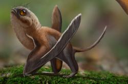 Rekonstrukce Sinomacrops bondei