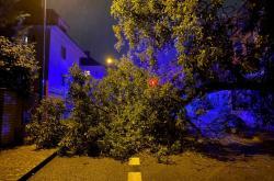 Spadlý strom v důsledku silného větru
