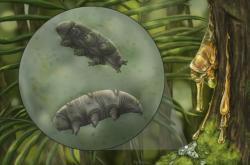 Rekonstrukce pravěkých želvušek