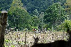 Lesy v Indonésii