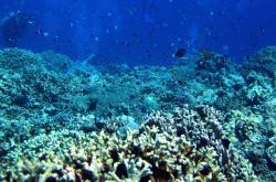 Korálový útes - ilustrační foto