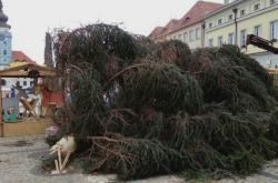 Vítr v Žatci zlomil vánoční strom