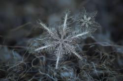 Velká galerie sněhových vloček