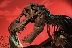 Hlava tyranosaura