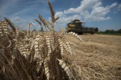 Výnosy obilí budou kvůli suchu letos skoro tak špatné jako v roce 2012