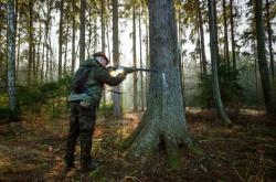 Vyškolení myslivci budou střílet divočáky v epicentru nákazy