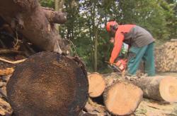 Lesníci se bojí zákazu těžby