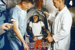 Šimpanz Ham