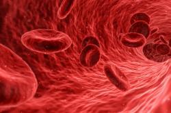 Životní formy před dvěma miliardami lety nemusely mít červené krvinky