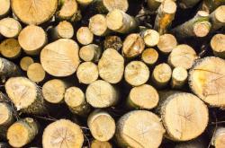 Lesní biomasa, ilustrační foto