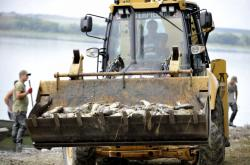 Odvážení mrtvých ryb z Nesytu