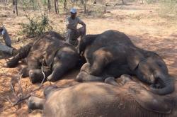 Upytlačení sloni v Botswaně