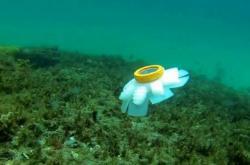 Robotická medúza