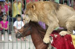 Zvířata v cirkuse