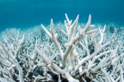 Korálové útesy:
