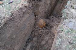 Puma nalezená při výkopových pracích v Bohuslavicích