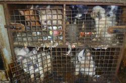 Rozsáhlý případ týraní psů v Kamenici nad Lipou
