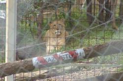 Výběh pro lvy ve Zděchově