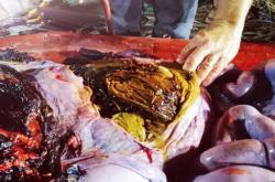 Plasty nalezené v mrtvé velrybě